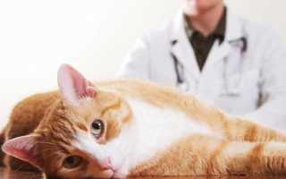 Что делать, если кот подавился