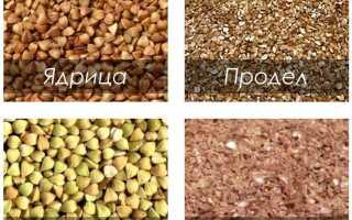 Как и сколько хранить гречку