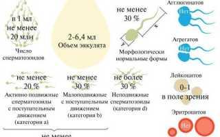 Сколько грамм спермы выделяется во время полового акта