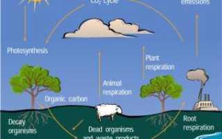 Как происходит круговорот углерода в природе